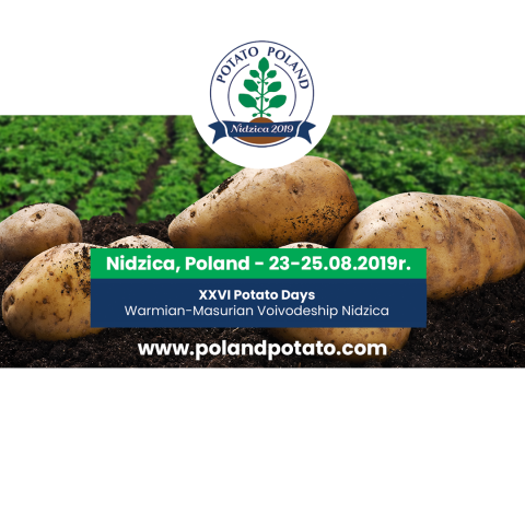 Potato poland
